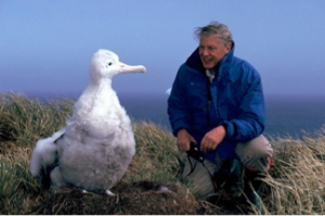 Save the Albatross