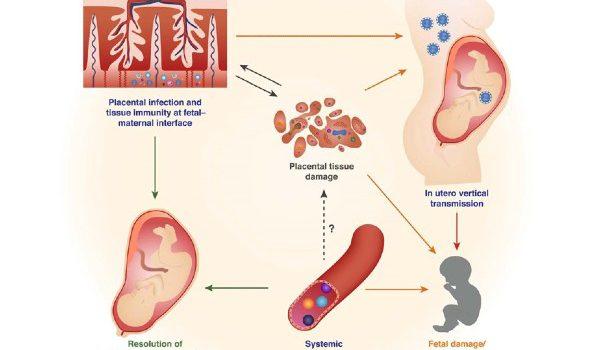 Mucosal Immunity paper figure